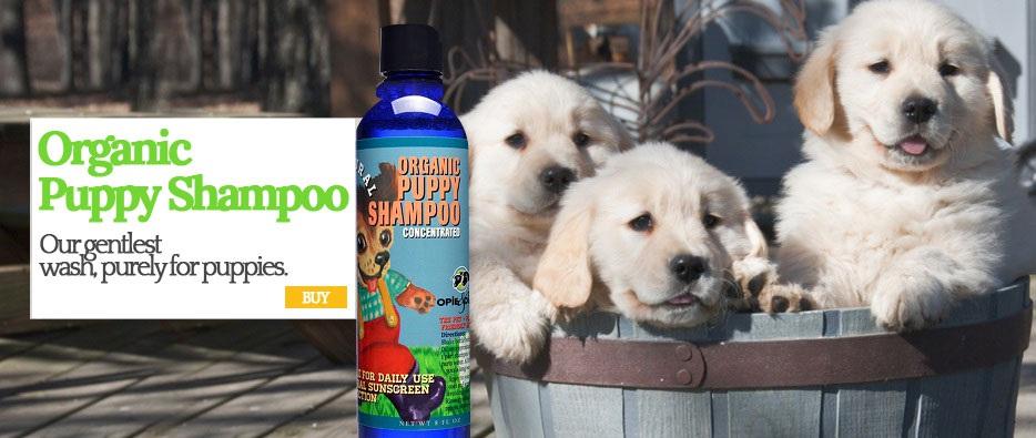 Organic Puppy Shampoo